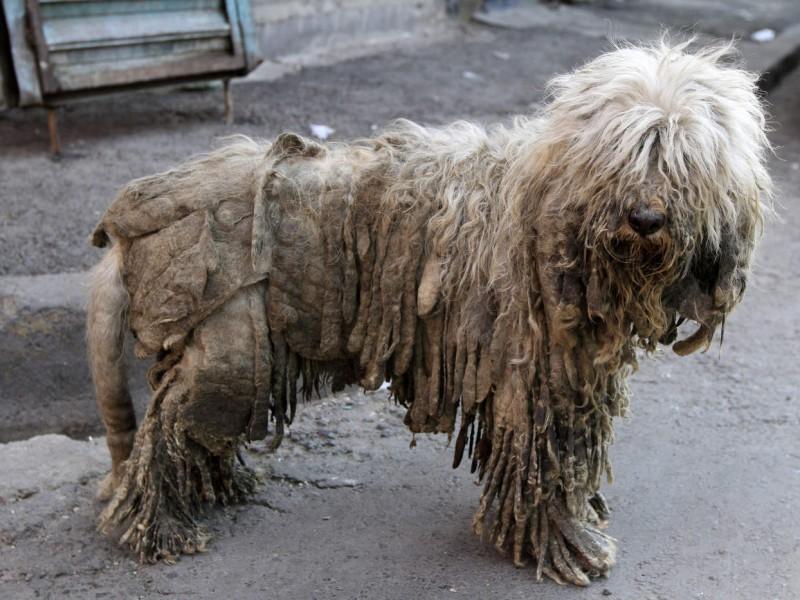 11 denuncias de maltrato animal en 2019