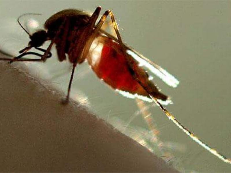 11 fallecimientos por dengue en Chiapas