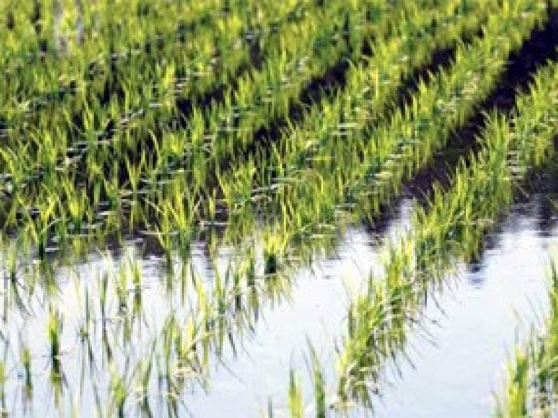 11 mil hectáreas afectadas por lluvia en Zacatecas