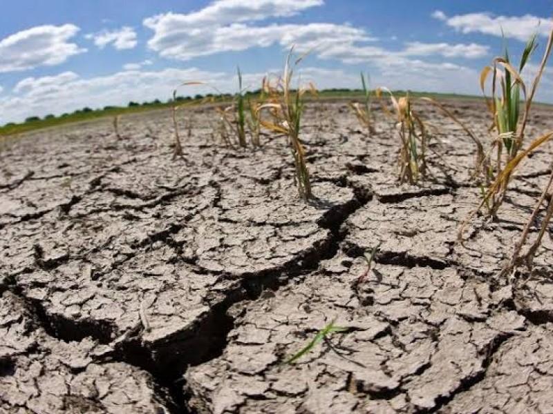 140 mil hectáreas en Sonora se quedarán sin sembrar
