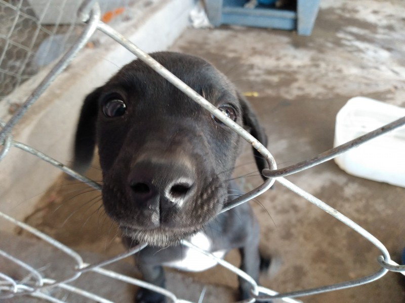 15 perros y 10 gatos esperan ser adoptados