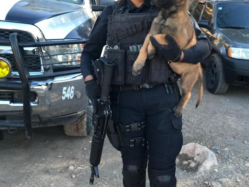 16 caninos forman parte de la Policía Estatal