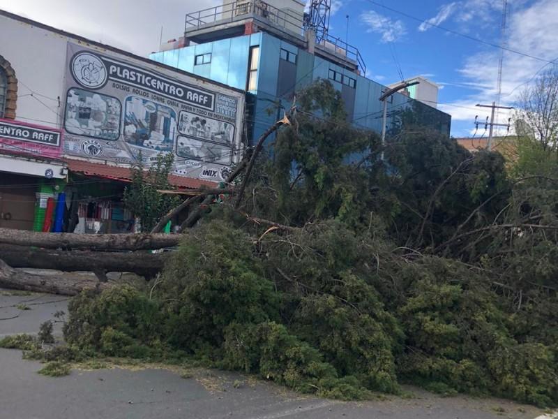 166 árboles derribados en la entidad mexiquense