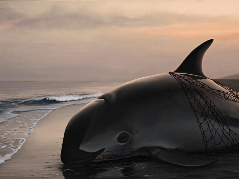 18 de julio, día internacional de la vaquita marina