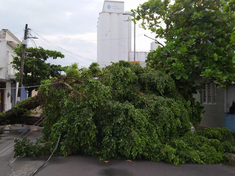 Causan daños árboles caídos por tormenta eléctrica en Veracruz