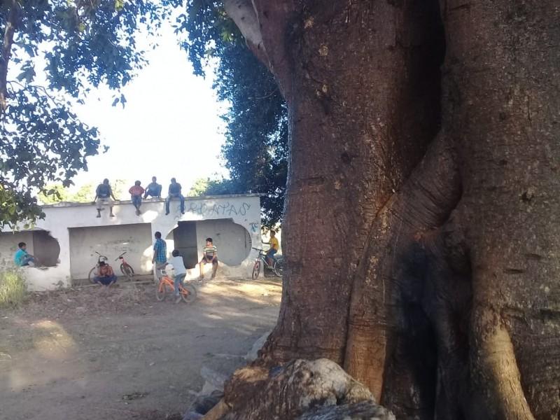 20 personas lesionadas por picadura de abejas en Etchojoa