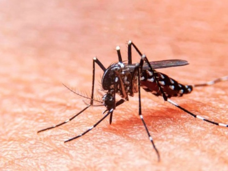 243 casos y cuatro muertes de dengue en Chiapas