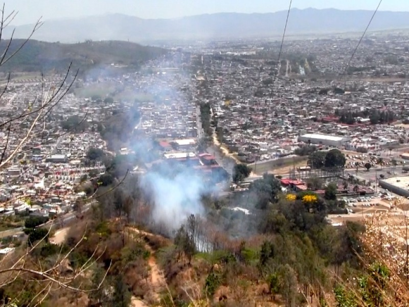 295 hectáreas han sido afectadas por incendios forestales en Tepic