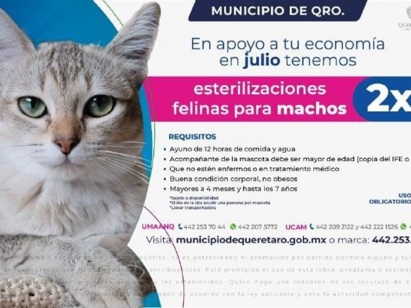 2x1 En esterilización de gatos machos en Querétaro