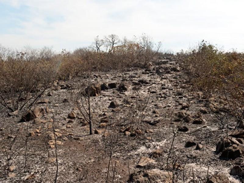 300 hectáreas afectadas por incendios