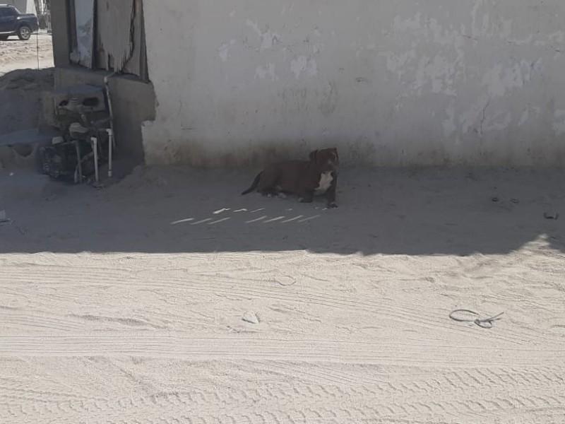 32 casos de maltrato animal en el municipio