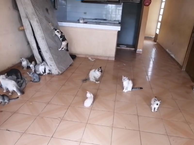 35 gatos fueron rescatados luego de que su dueña falleciera