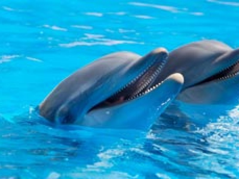4 de julio, día mundial de los.delfines en cautiverio
