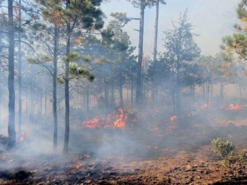 Reporta PC 4 incendios forestales activos