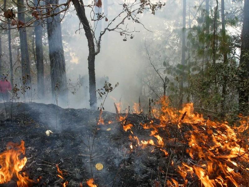 4 mil hectáreas han sido afectadas por incendios