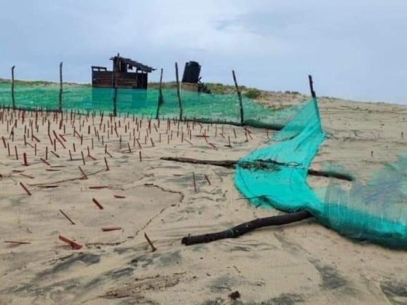 400 nidos de tortugas afectados por lluvias en Costa Grande