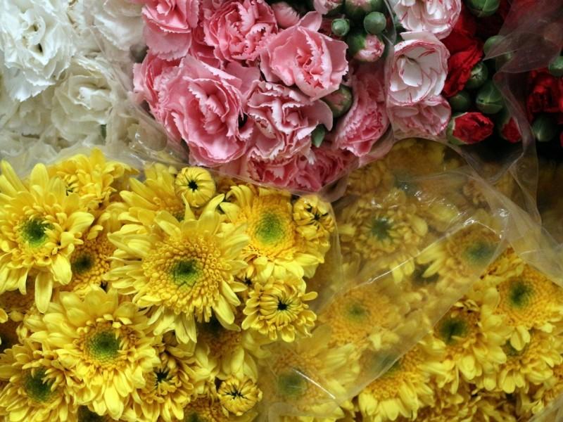 4,500 hectáreas de flor para 10 de Mayo