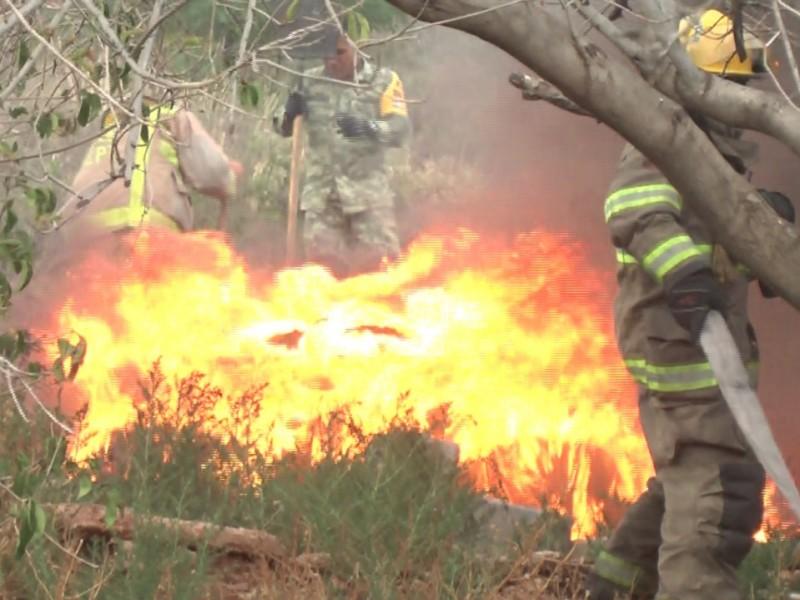 596 Incendios hasta el momento en Zacatecas