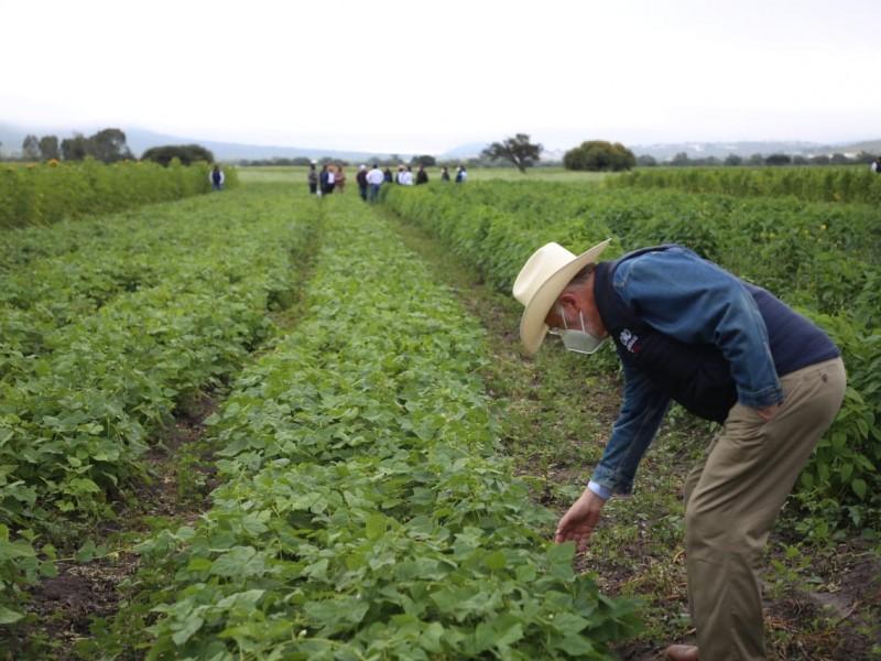 6 mil 200 hectáreas de cultivo afectadas por heladas