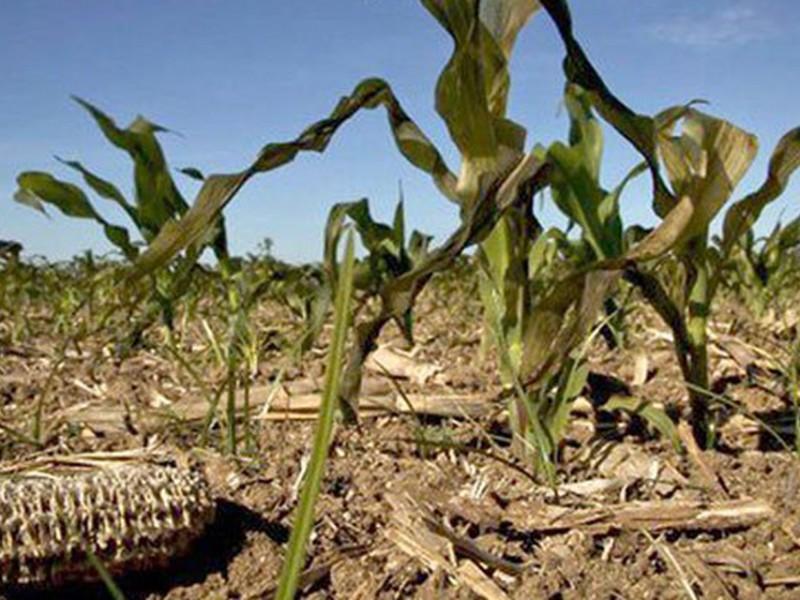61 millones se han entregado a productores afectados por sequía