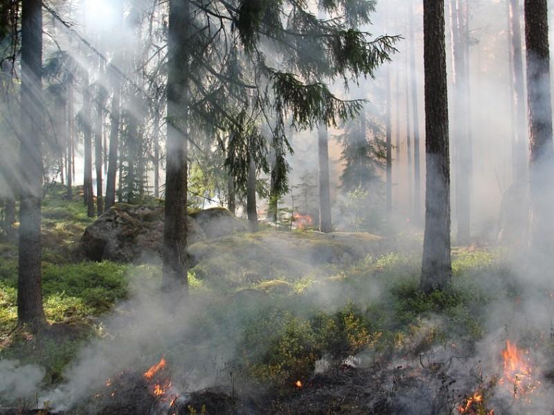 65 incendios forestales en La Primavera