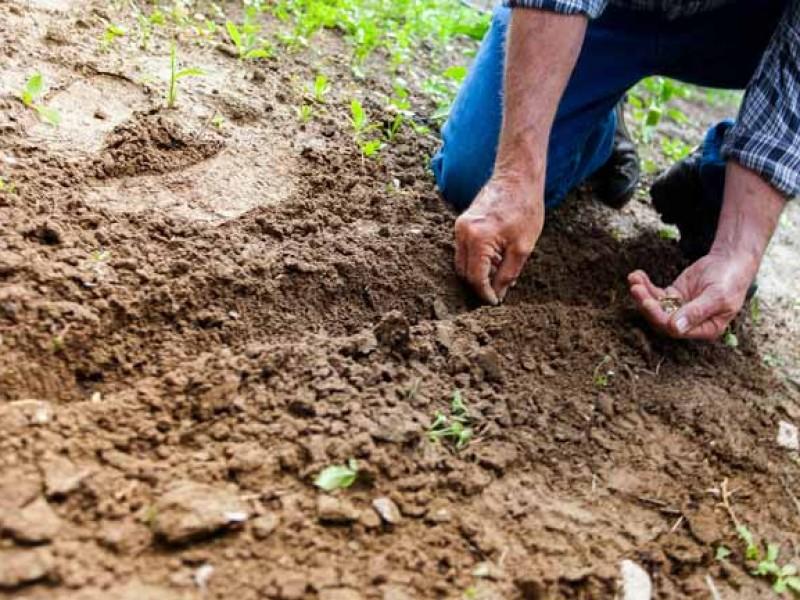 7 de julio, día mundial de la conservación del suelo