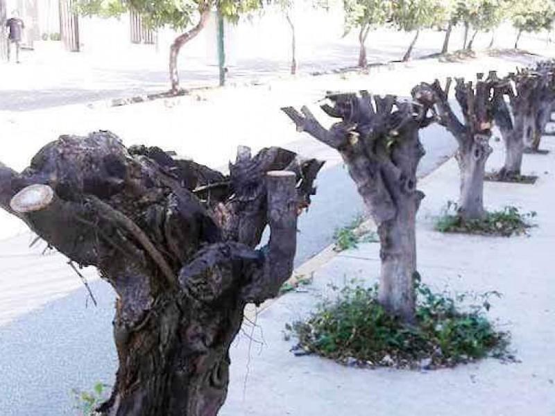 75 sanciones por talar árboles en TGZ