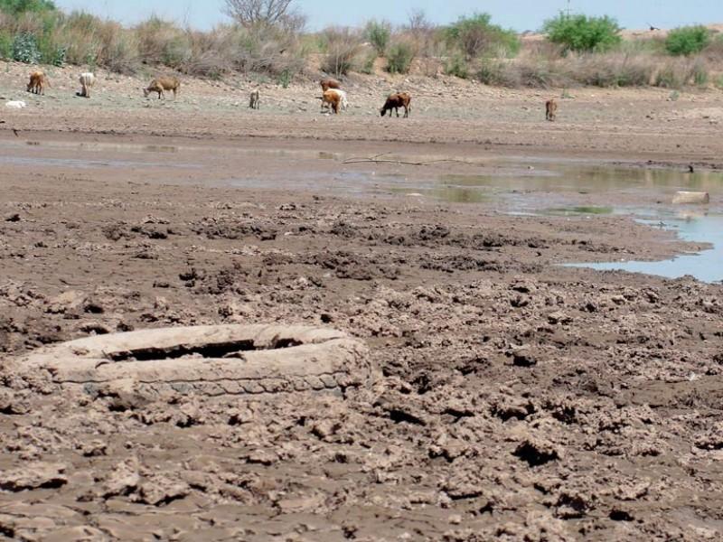 78 municipios veracruzanos con algún grado de sequía