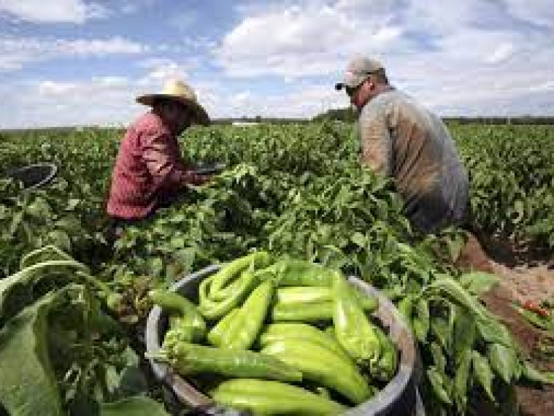 9 de septiembre, día mundial de la agricultura