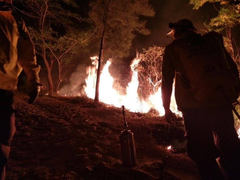 A la baja los incendios forestales de Nayarit
