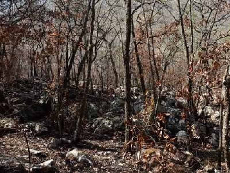 A la baja quemas agrícolas en Jalpan