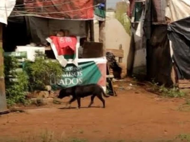 Abandonan perros en col. 3 de julio