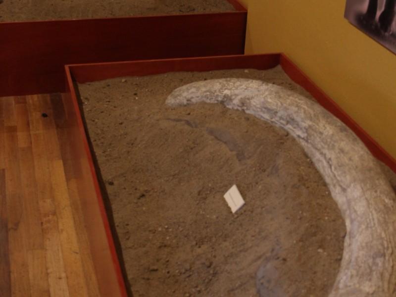 Abren salón de exposiciones Paleontológicas y Arqueológicas