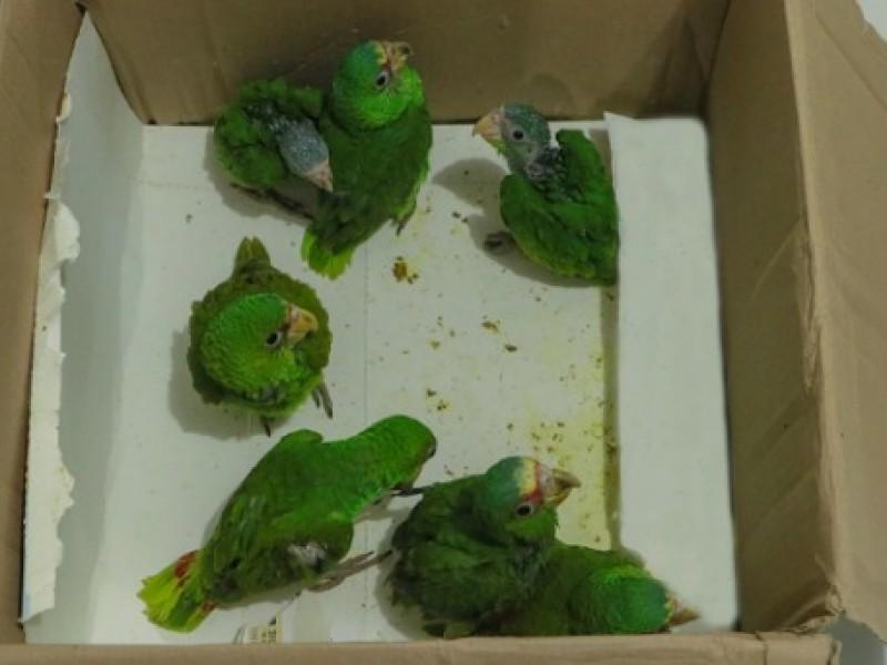 A.C motiva al cuidado de aves en peligro de extinción