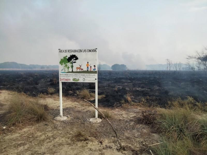 Acaba incendio provocado trabajo de reforestación en Reserva La Encrucijada