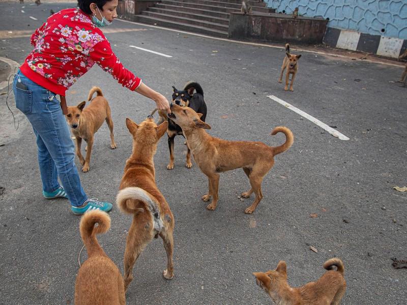 Activa perrera municipal con adopciones