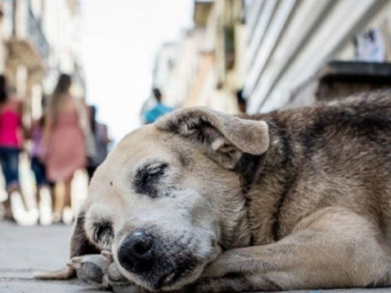 Activan campaña de acopio de Pet para sufragar esterilizaciones