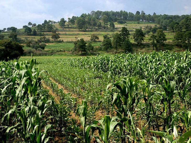 Actividad agrícola estancada por falta de recursos