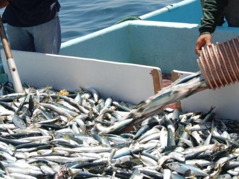 Actividad sardinera inicia con