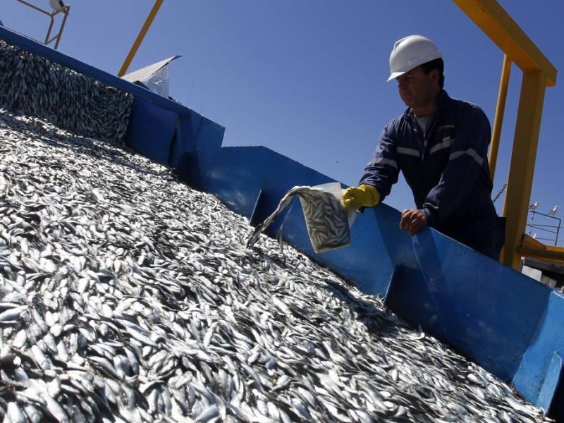 Actividad sardinera mantiene 3 mil empleos activos