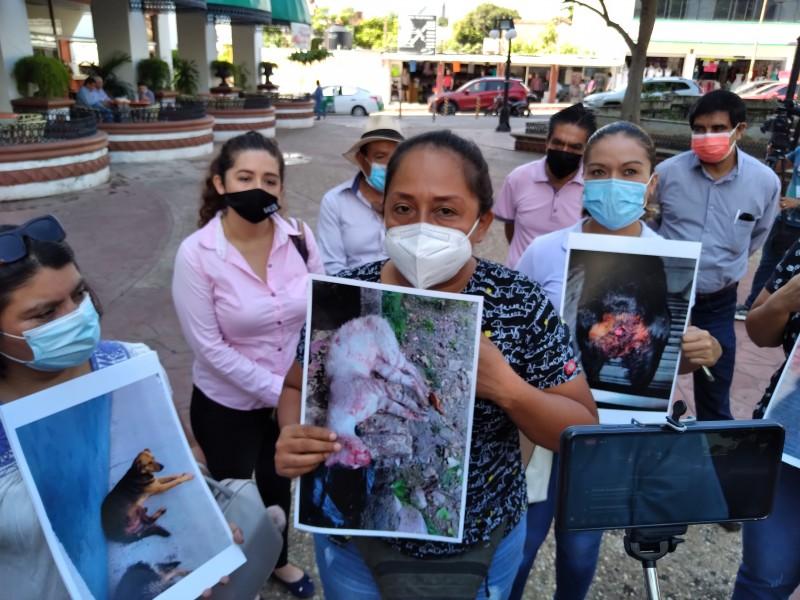 Activistas temen que iniciativa contra maltrato animal quede congelada