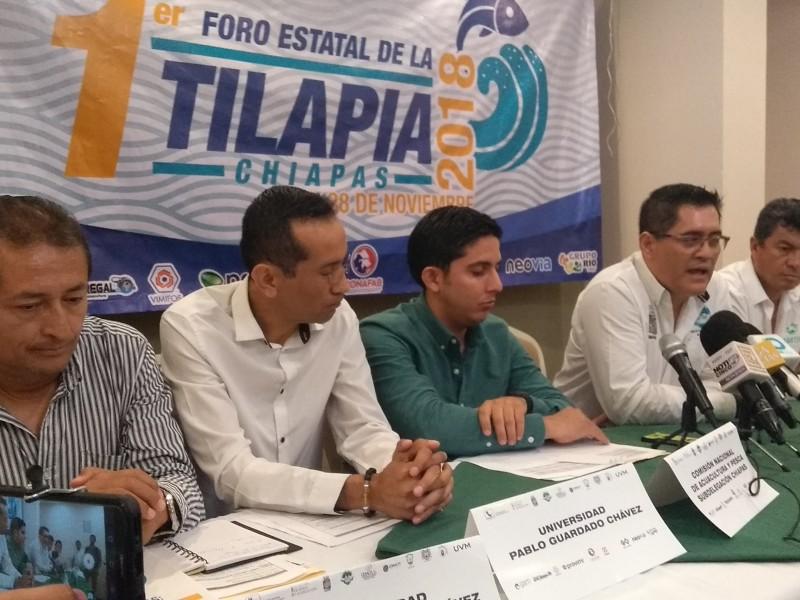 Acuacultores buscan mejorar producción de Tilapia