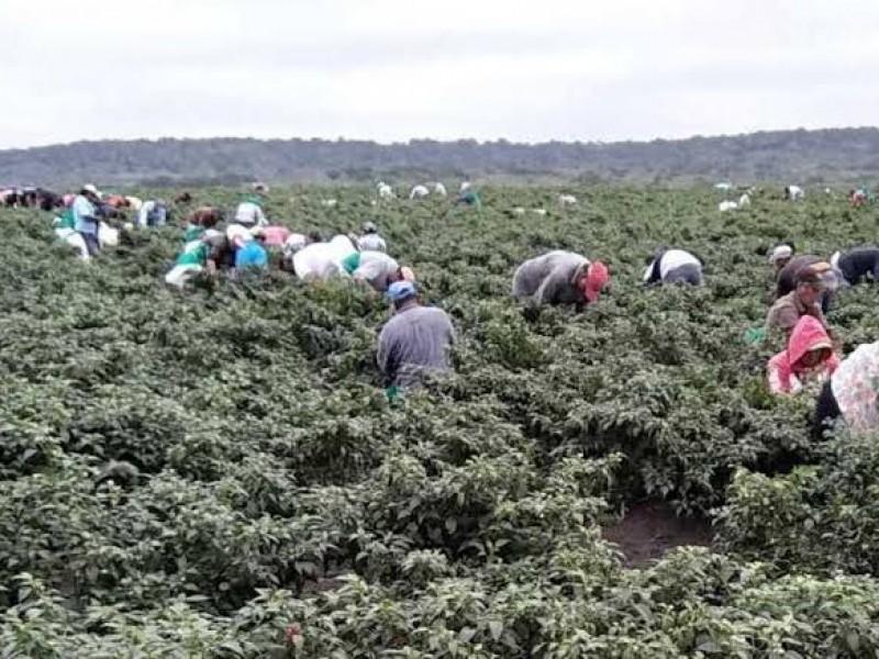 Acuerdan México y Canadá mejorar protección sanitaria de trabajadores agrícolas