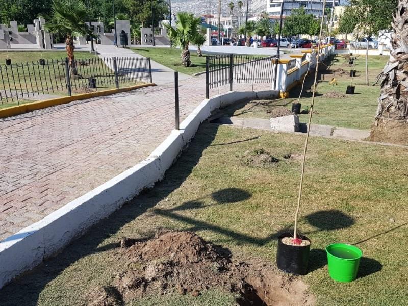Plantan cien árboles en la Alameda Zaragoza