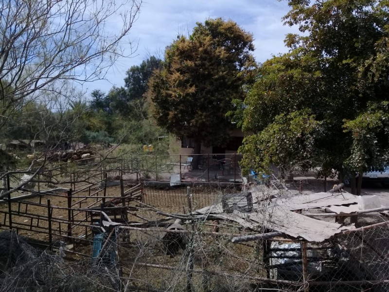 Adultos mayores son atacados por abejas en El Amapal