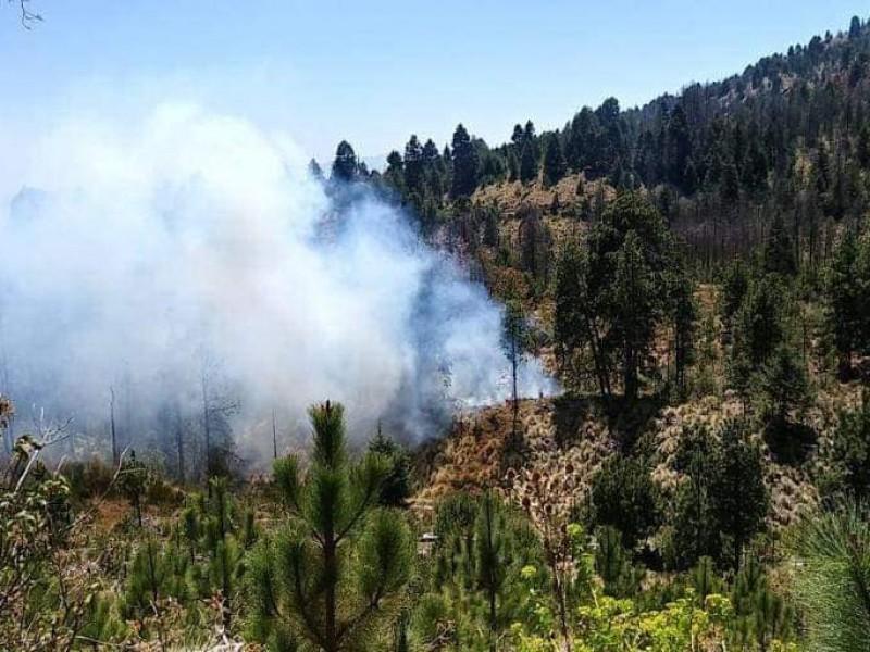 Advierte Conafor temporada crítica de incendios forestales en Colima