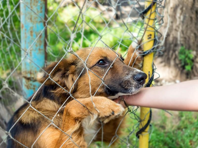 Advierte salud pública reducción en abandono animal
