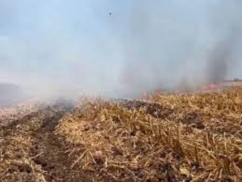 Advierte Sanidad Vegetal sobre sanciones por quema de soca