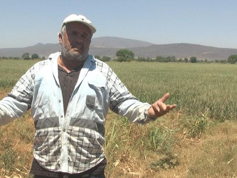 Demandarán campesinos jaliscienses por pérdidas ante cortes de agua gubernamentales