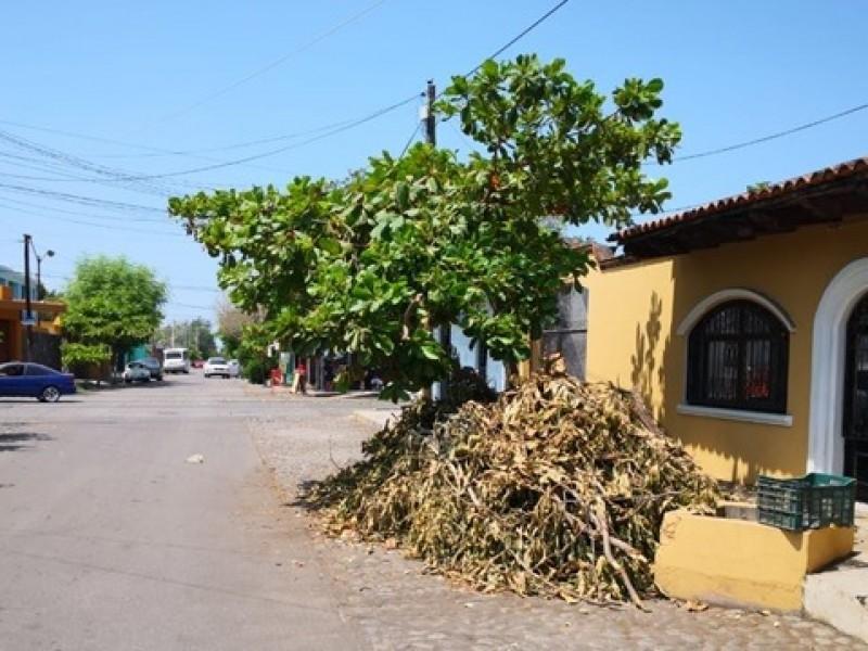 Advierten multas por podar o derribar árboles sin autorización